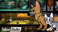 Fallout Shelter: Update bringt Hunde, Katzen und mehr