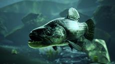 Riesen-Wolfsfisch / Carp & Coarse - Dovetail Games